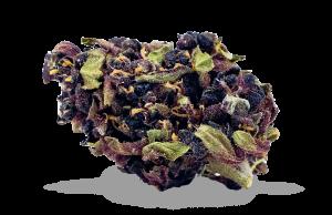 Cannabis wholesale europe cbd