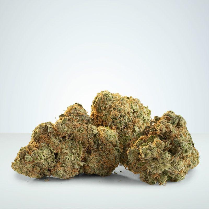 CBD Weed harlequin haze wholesale viracan